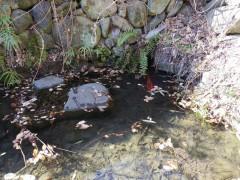 池があります