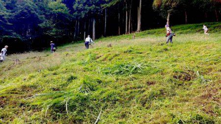 昨年は草刈りに混ざらせていただきました。